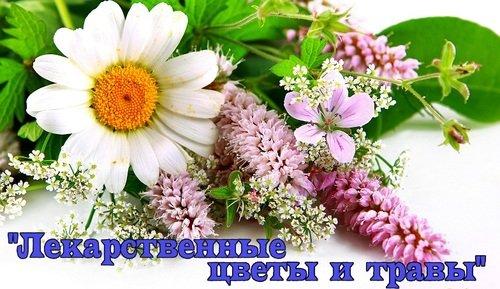 """ИТОГИ КОНКУРСА  """"Лекарственные цветы и травы"""""""