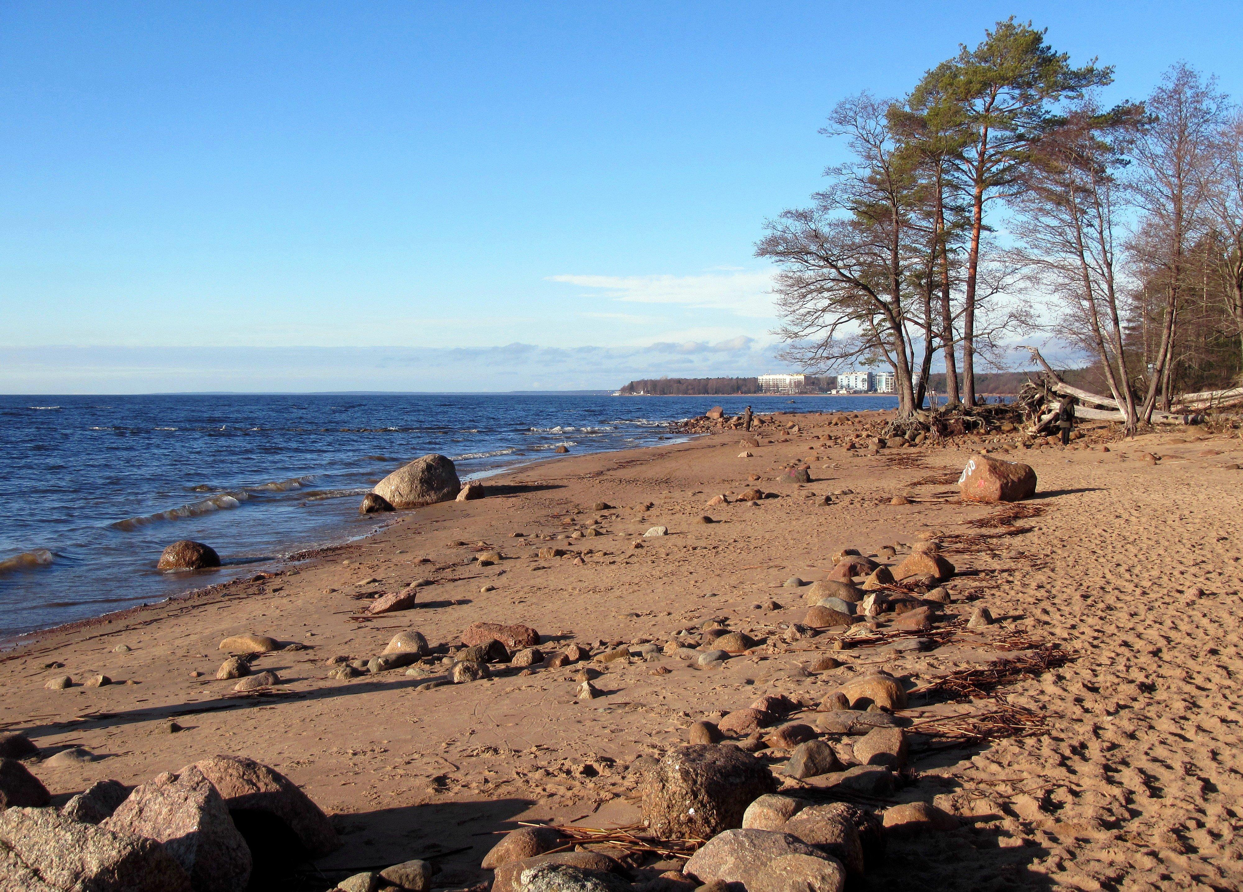 говорить спасибо фото пляжей финского залива касается самой рыбы
