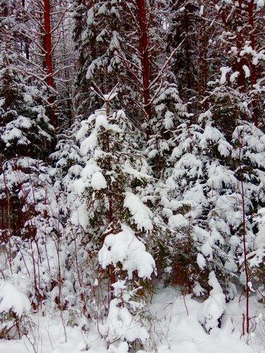 Зимняя красота.