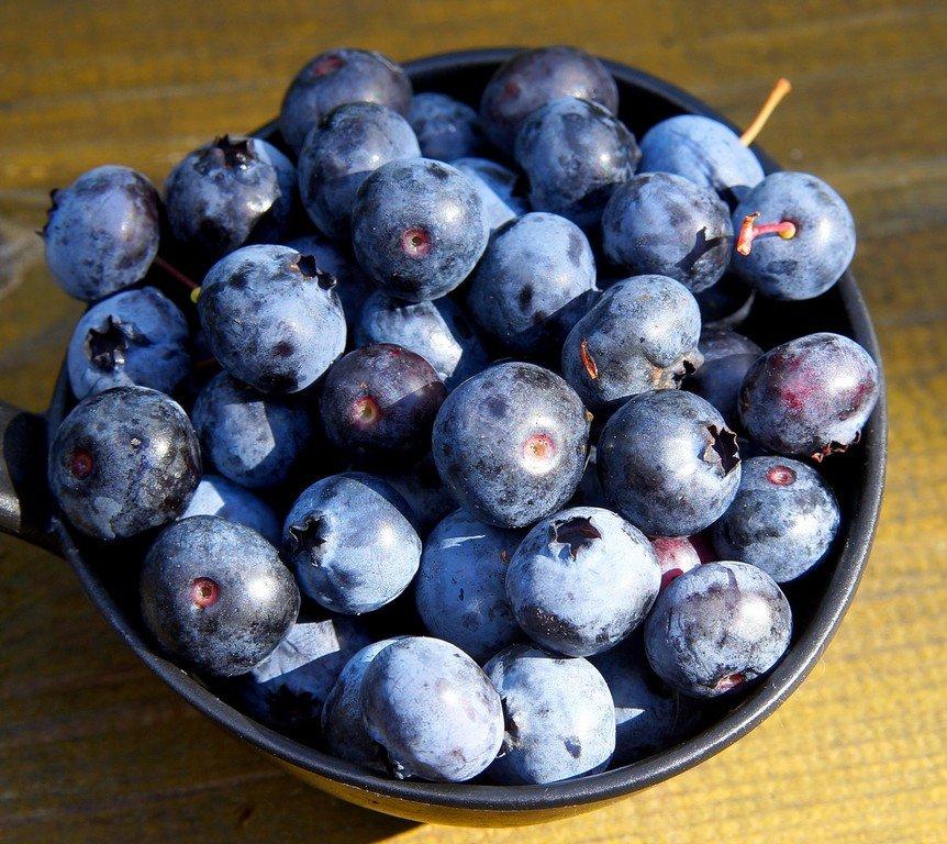 голубика фото ягода фотографии, собранные вместе