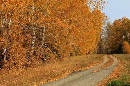 Осенняя дорога.