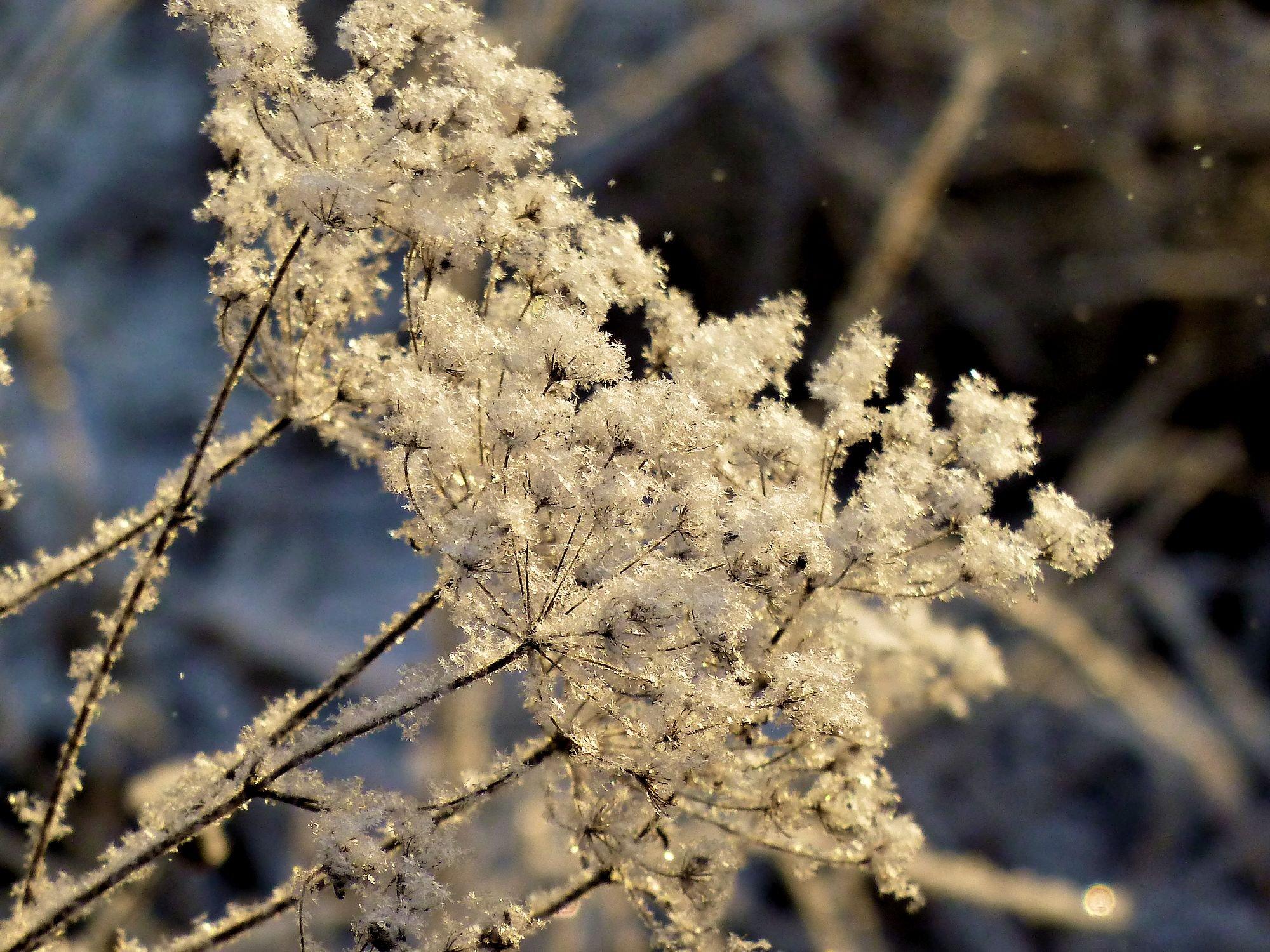 провести самое красивое фото зимней изморози инея вас