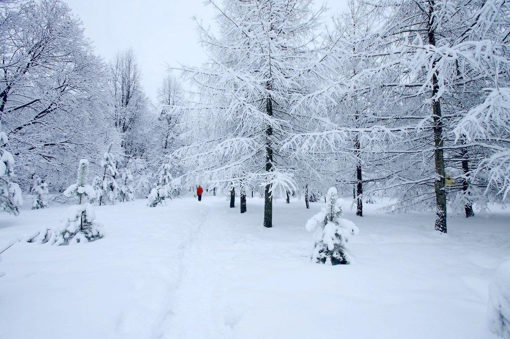 Зимними тропинками