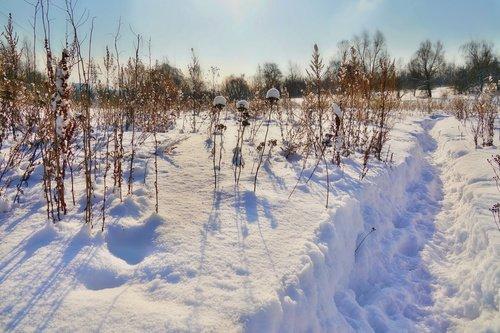 Снежными тропинками