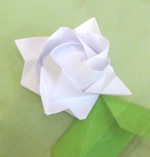 Розы Кавасаки.