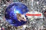 """Крыса поздравляет :""""С Новым годом!"""""""