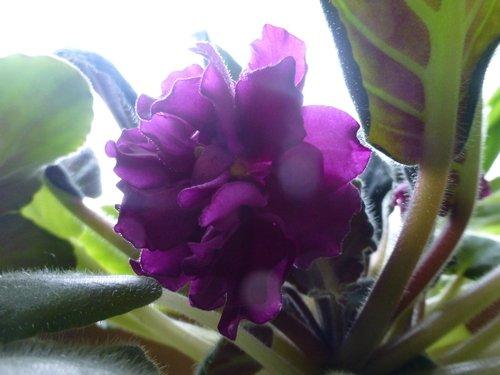 Сложный цветок