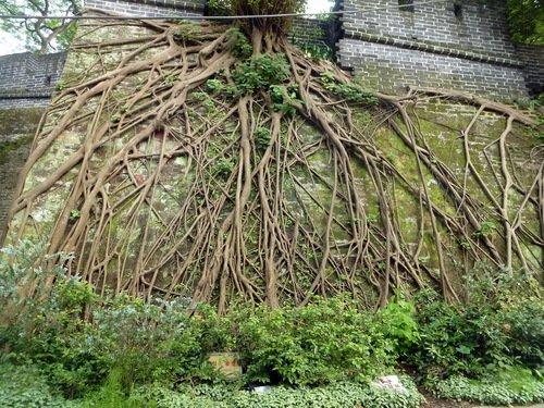 Что мы знаем о корнях деревьев...