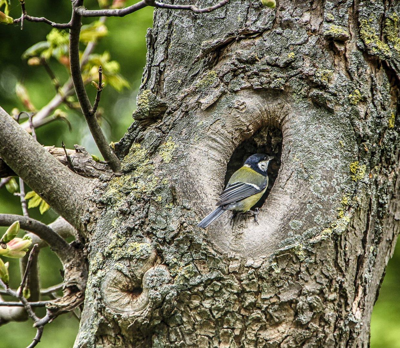 время картинки дупла птиц вида