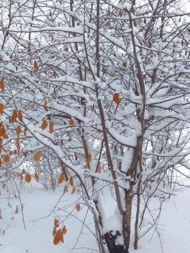 Снега...