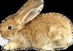 Зайцы и белки