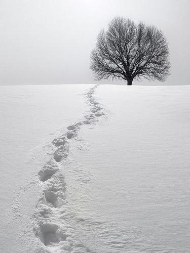 СНЕГ. Как обновить свою жизнь снегом.