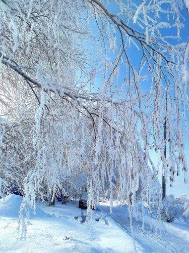 Ледяные ветви.